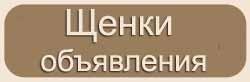ДОСКА ОБЪЯВЛЕНИЙ - ПРОДАЖА ЩЕНКОВ